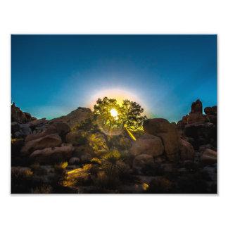 Sunrise Joshua TreeNational Park Photo Print