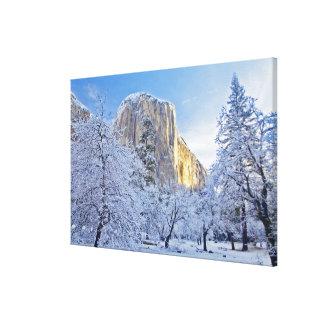 Sunrise light hits El Capitan through snowy Gallery Wrap Canvas