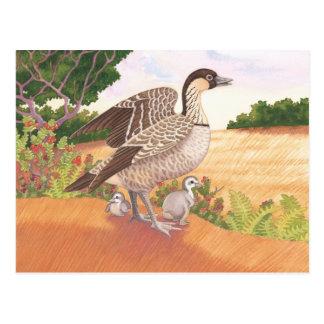 Sunrise Nene (Hawaiian Goose) Postcard