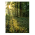 Sunrise through oak and hickory forest, Mammoth Postcard