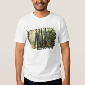 Sunrise through oak and hickory forest, shirts