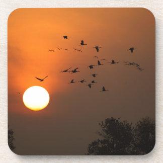 Sunrise with flocks of flying cranes coasters