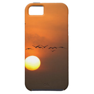 Sunrise with flocks of flying cranes iPhone 5 cover