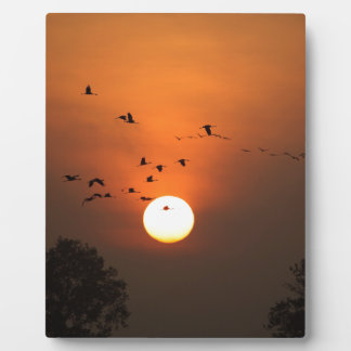 Sunrise with flocks of flying cranes plaque