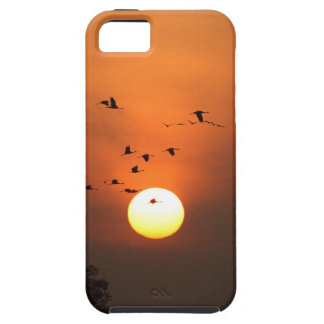 Sunrise with flocks of flying cranes tough iPhone 5 case