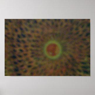 Suns Eclipse Print