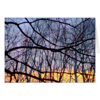 Sunset & A Red Cardinal Blank Greeting Card