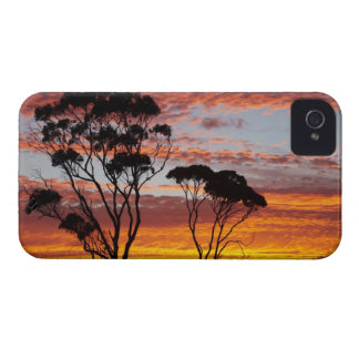 Sunset and Gum Tree, Binalong Bay, Bay of Fires, iPhone 4 Case-Mate Cases