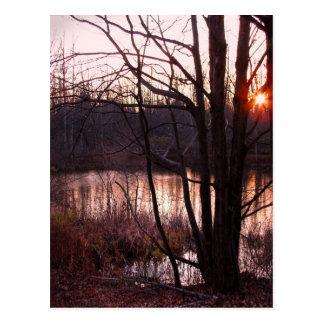 Sunset at the Pond Postcard