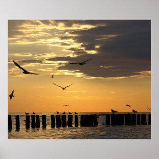 Sunset Birds Florida Print