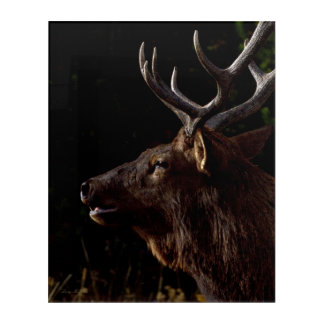 Sunset Bull Elk Acrylic Wall Art