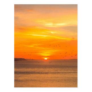 Sunset  Coast with Orange Sun and Birds Postcard