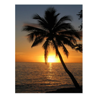 Sunset coconut palm tree Fiji peace and joy Postcard