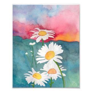 Sunset Daisy Art Print Photographic Print