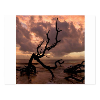 Sunset Driftwood Beach Postcard
