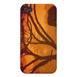 Sunset Elephant Covers For iPhone 4