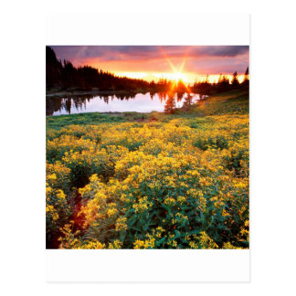 Sunset Gold King Basin San Juan Colorado Postcard
