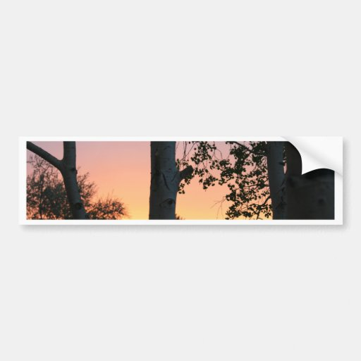 Sunset in the Trees Bumper Sticker