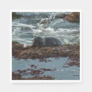 Sunset Lit Harbor Seal I at San Diego Paper Napkin
