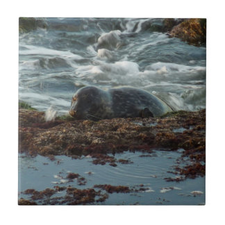 Sunset Lit Harbor Seal Small Square Tile
