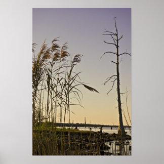 Sunset on Louisiana Swamps Poster