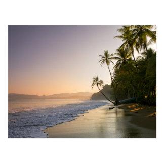 Sunset On Palm Fringed Beach, Costa Rica Postcard