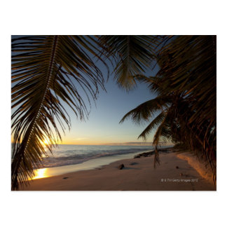 Sunset over Indian Ocean seen through palm Postcard
