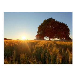 Sunset Over Wheat Field Postcard