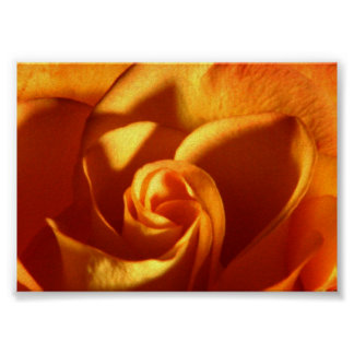 Sunset Rose Beautiful Nature Photography Poster