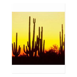 Sunset Saguaro Cactus At Postcard