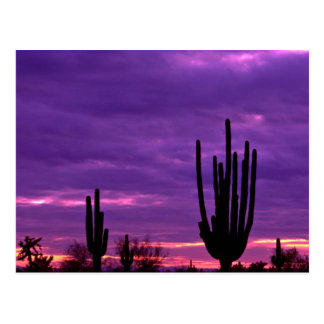 Sunset, Scottsdale, Arizona Postcard
