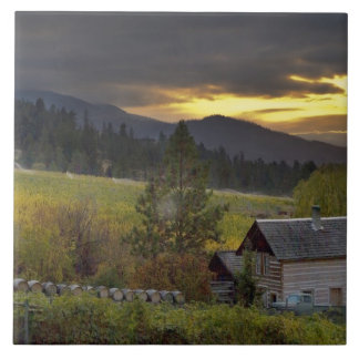 Sunset sky over vineyards and historic log cabin large square tile