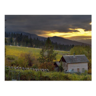 Sunset sky over vineyards and historic log cabin postcard