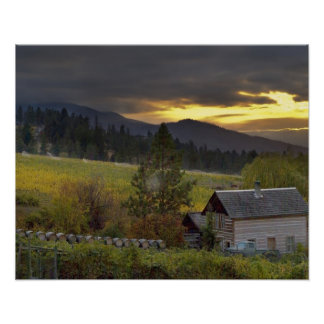 Sunset sky over vineyards and historic log cabin poster