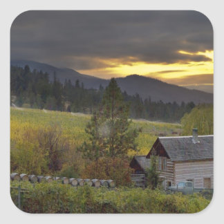 Sunset sky over vineyards and historic log cabin square sticker