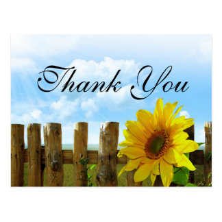 Sunset sunflowers wood Fence Thank you card Postcard