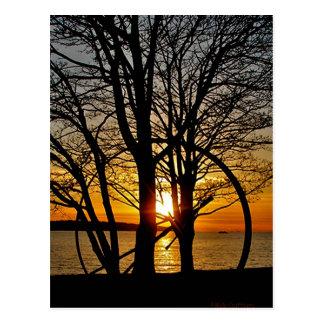 Sunset Through Art Postcard