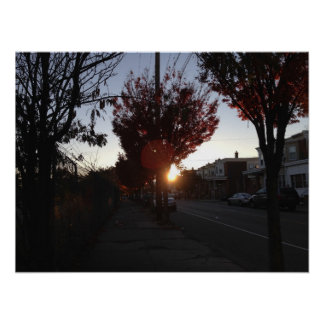 Sunset through Rows of Trees Poster