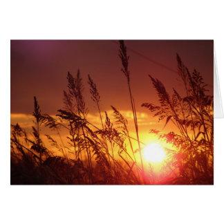 Sunset through Rye Field Blank Note Card