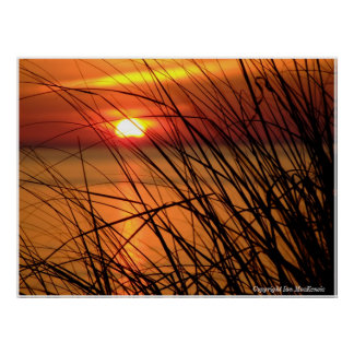 sunset through the weeds Copyright Ian MacKenzie Poster