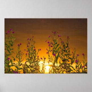 sunset through the wild  coastal flowers poster