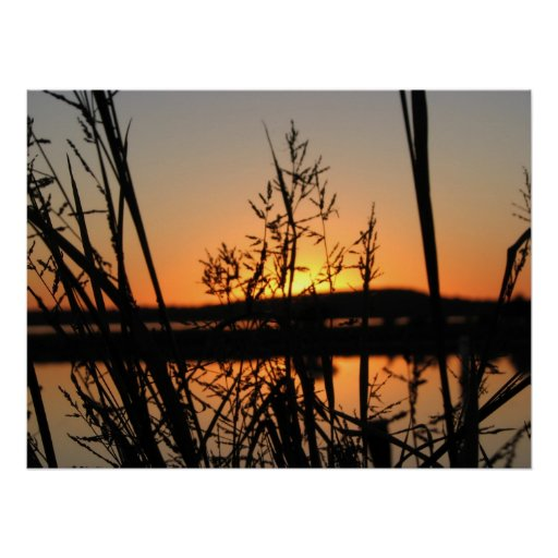 sunset through weeds posters