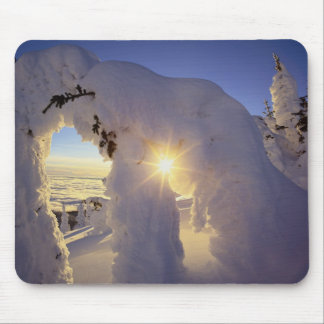 Sunset thru the Snowghosts at Big Mountain near Mouse Pad