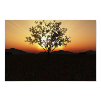 "Sunset Tree - 19"" x 13"" Poster"