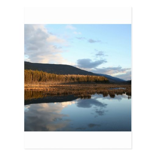 Sunset Tree Lake Reflection Post Cards