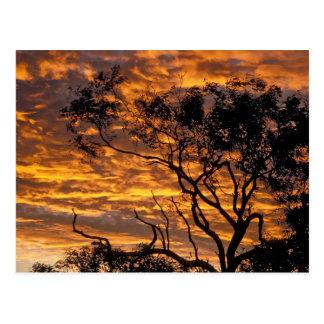 Sunset, Uluru-Kata Tjuta National Park, Postcard