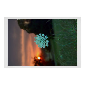 sunset weeds poster