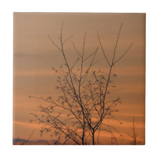 Sunset whit tree branches, colorful sky small square tile