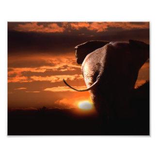 Sunset with Elephant Art Photo