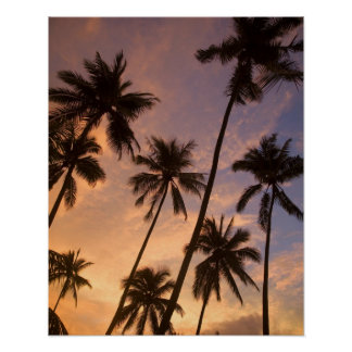Sunset with Palm Trees, Moorea, French Polynesia 2 Poster